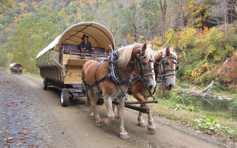 A horse-drawn covered wagon in wilderness